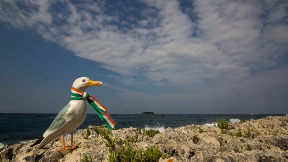 Seamus the Seagull with green white and orange ribbon tied around his neck, standing on rocks at shore, sea in background, island on the horizon