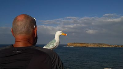 Seamus the Seagull on man's shoulder, looking at offshore island