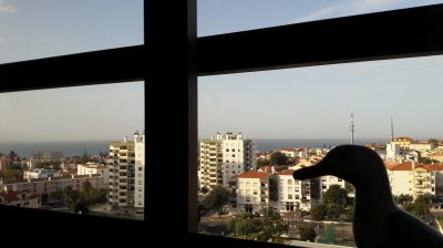 Silhouette of Seamus the Seagull on window sill in Lisbon high rise