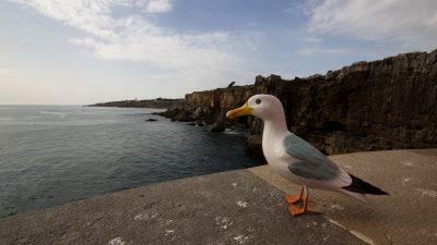 Seamus the Seagull at cliffs of Boca do Inferno Cascais Portugal