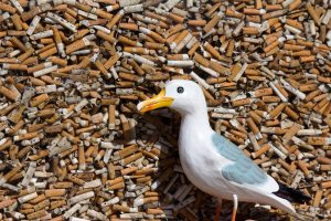 Seamus the Seagull in front of glass case full of cigarette butts