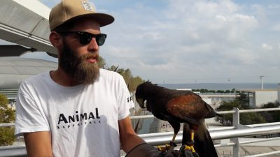 Ayres eagle with handler in Vasco da Gama Centre Lisbon