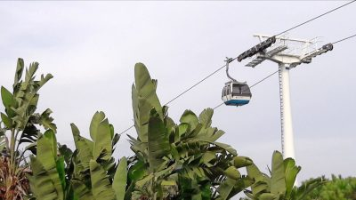 banana trees with cable car in background