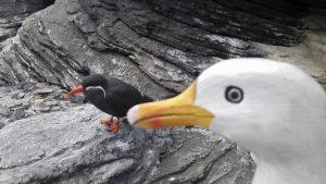 Seamus the Seagull with Inca tern at Libon Oceanarium