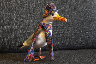 Seamus the Seagull in wool hat and scarf