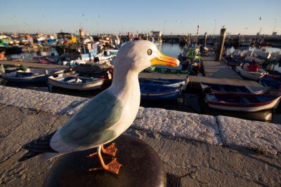 Seamus the Seagull standing on bollard at Setubal Harbour, Setúbal City, Portugal