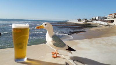 Seamus the Seagull with pint of beer on wall at beach