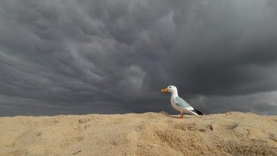 Seamus the Seagull standing in sand with dramatic dark cloudy sky in background, Lagoa de Albufeira, Albufeira Lagoon, Portugal
