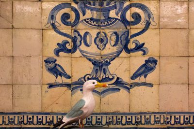Seamus the Seagull standing in front of tile picture of urn with two owls, Coimbra University, Portugal