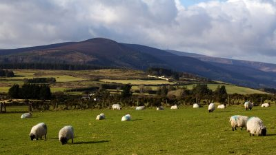sheep grazing in field with more fields and hills in background, cloudy skies, County Wicklow, Ireland
