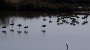 Flamingos, Praias do Sado
